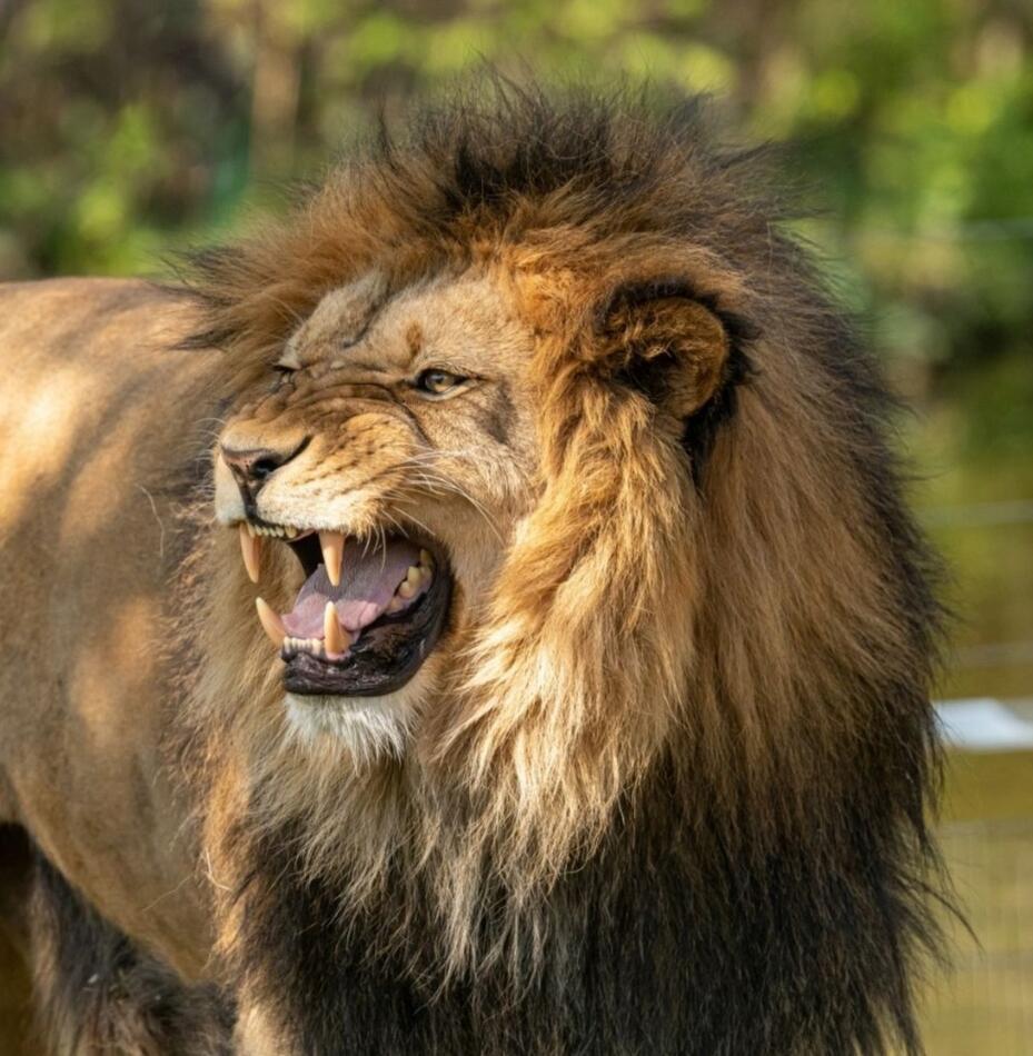 """Сериал """"Хищники крупным планом"""" на канале Animal Planet"""